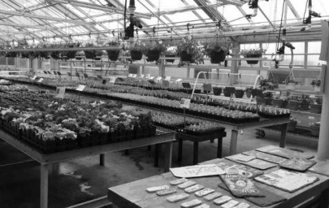 Agriculture department hosts annual plant sale; First day sales hit record high