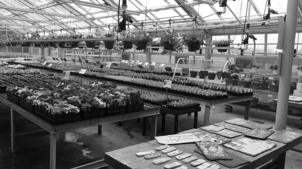Agriculture+department+hosts+annual+plant+sale%3B+First+day+sales+hit+record+high