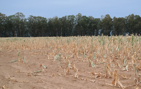 Maryland faces drought conditions this fall; Local harvests impacted