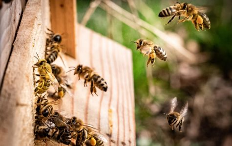 Honey Bees carrying pollen back to their hive. Photo by Kai Wenzel on Unsplash