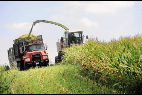 Josh Sellers (right) and Greg Dell (left) chop corn for silage in a field that will be planted with cover crops. Carroll county farmers enroll more than 40,000 acres of cover crops each year.