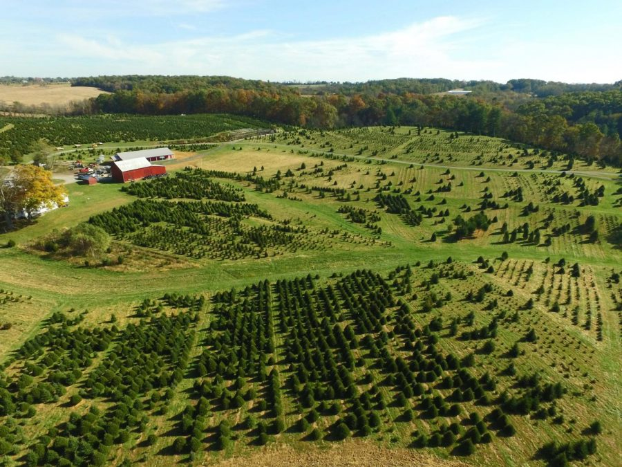 """Pictured above is a photo of one of the largest """"cut your own"""" tree farms in Maryland. Davidson Christmas Tree Farm opened for their 52nd season on Nov 23 and they will be open everyday until december 23."""